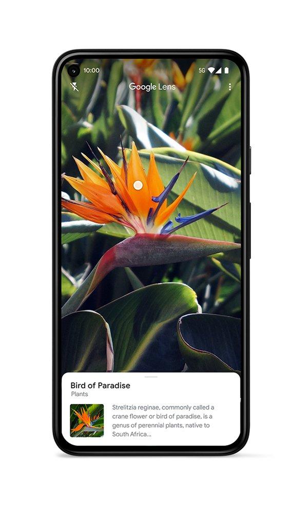 P5-Lens-UI-plant-JPG.max-1000x1000-1